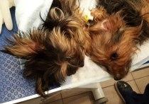 В квартире москвички нашли кладбище домашних животных