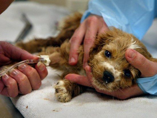 Закон для них не писан: ветеринарные клиники Екатеринбурга, где убивают животных